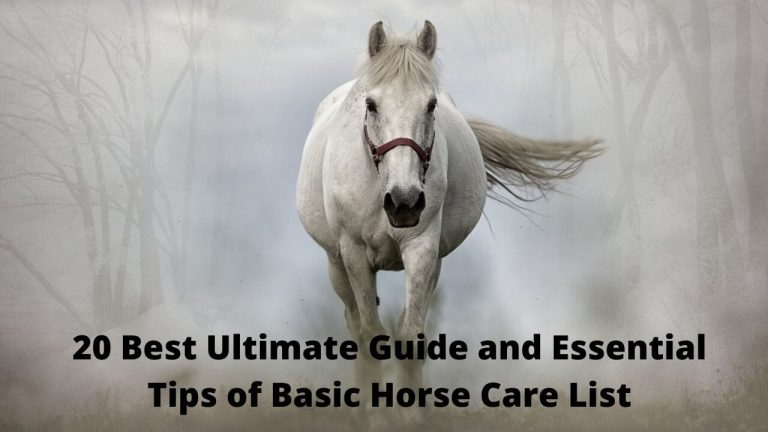 20 Best Ultimate Guide and Essential Tips of Basic Horse Care List