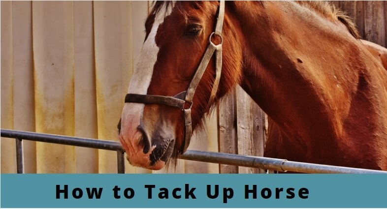 How-To-Tack-Up-Horse