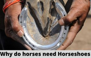 Why do horses need horseshoes?