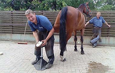 best hoof stand for horses